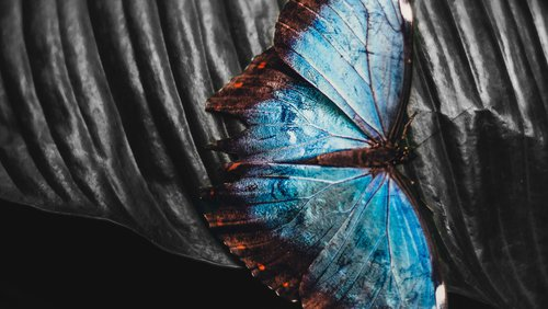 Butterfly - Thumbnail